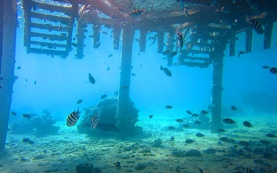 Aqaba Dive Sites-Tarmac Five