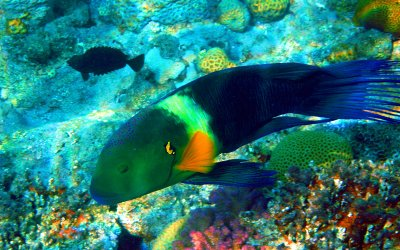 Aqaba Dive sites-Rainbow Reef