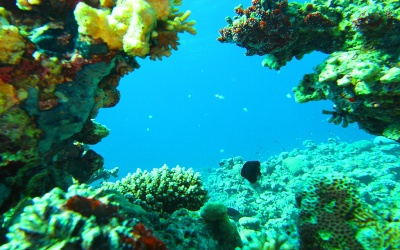 Coral Garden - Aqaba diving sites